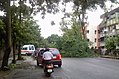 Fallen tree obstructed traffic.jpg