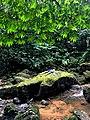 Feel nature at Amboró.jpg