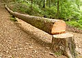 Felled tree, Killynether Wood - geograph.org.uk - 939995.jpg