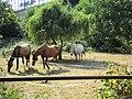 Ffm-Niederursel, Pferdekoppeln (2).jpg