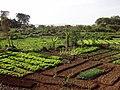 Fields along Lakeshore - Bahir Dar - Ethiopia (8680028871).jpg