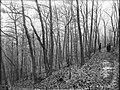File--C5235-CC5244- Mine Brook, NJ (9472bab8-c0e7-4d29-a7de-71700a12b0e7).jpg