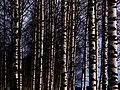 Finland 2014-03-15 (13282352733).jpg