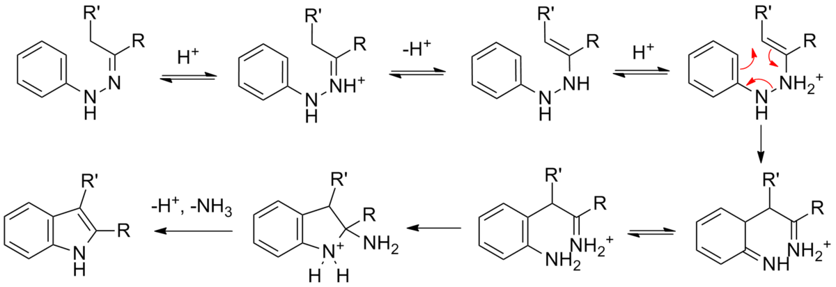 Fischer Indole Synthesis Wikipedia