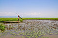 Fishing by spear in a haor of Sunamganj, Bangladesh.jpg