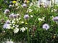 Fleur inconnue - panoramio (8).jpg