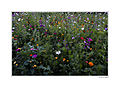 Fleurs Jardin Bonnefoy TOULOUSE.jpg