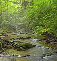 Flickr - Nicholas T - Bear Pen Run (1).jpg