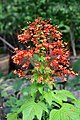 Flora of Thailand - 47.jpg