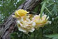 Flores primaverales junto a un sauce llorón - panoramio.jpg