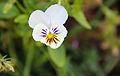 Flower-105.jpg