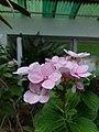 Flower20170706 151509.jpg