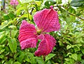 Flower (20726310558).jpg