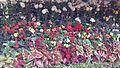 Flower Show 01.jpg