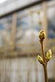 Flower bud (15784114566).jpg