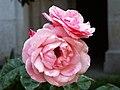 Flowers IX (5586688636).jpg