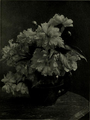 Flowers by Belle Johnson.png