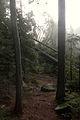 Fog - Algonquin Provincial Park, Ontario 01.jpg