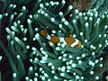 Fond marin - Nusa Penida.jpg