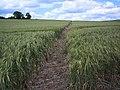 Footpath from Ham Corner, Tarrant Rushton - geograph.org.uk - 452009.jpg