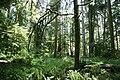 Forest (522823323).jpg