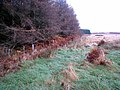 Forest edge, Edlingham Woods - geograph.org.uk - 616244.jpg