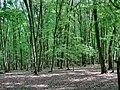 Forest in Târgu Mureș - panoramio - paulnasca (10).jpg