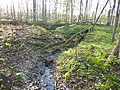 Forest stream (50028556657).jpg