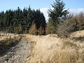 Forest track, above Glenboi - geograph.org.uk - 1205887.jpg