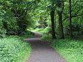 Forest walk Learmount.jpg
