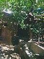 Forestiere Underground Gardens in Fresno, California 01.jpg