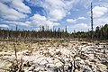 Formation of bogs (mesotrophic) In the climatic zone (taiga, forest-tundra) of the Arkhangelsk region. 2.jpg