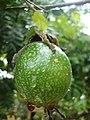 Frutasdocatimbau.jpg
