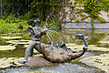 Fuente, Tierpark Hellabrunn, Múnich, Alemania, 2012-06-17, DD 01.JPG