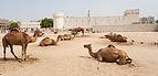 Fuerte Al Koot, Doha, Catar, 2013-08-06, DD 05.JPG