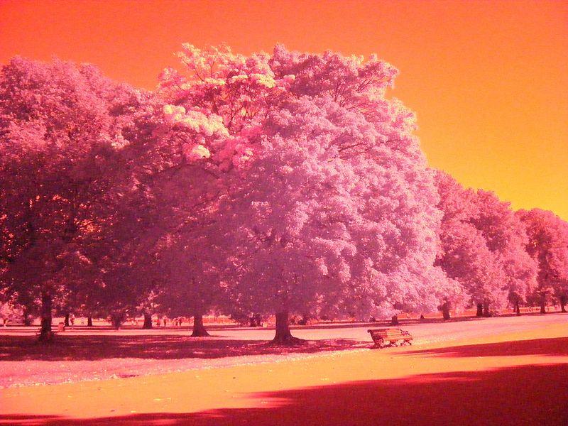 Arbres des jardins de Kensington avec un filtre psychédélique - Photo de Marcus Rowland