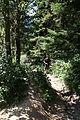 Główny Szlak Beskidzki - Path to Smerek 07.jpg