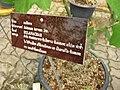 Gardenology.org-IMG 7662 qsbg11mar.jpg