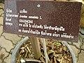 Gardenology.org-IMG 7970 qsbg11mar.jpg