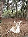 Gaziantep Zoo 1260098.jpg