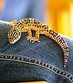 Gecko(1).JPG