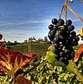 Gengenbach und der Wein. 02.jpg