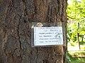 Giardino botanico di Brera (Milan 10.jpg
