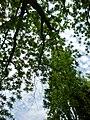 Giardino di Ninfa 117.jpg