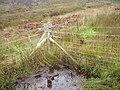 Glaur - geograph.org.uk - 254369.jpg