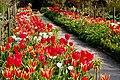 Glenveagh National Park - Flowers in Walled Garden - geograph.org.uk - 1189247.jpg