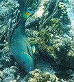 Glover's Reef 2-15 (33177416772).jpg