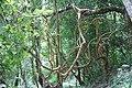 Godawari Botanical Garden (25).jpg