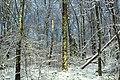 Golden Eagle Trail (Full Hike) (7) (11142376913).jpg