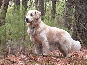 List of U S  state dogs - Wikiwand